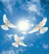doves-1