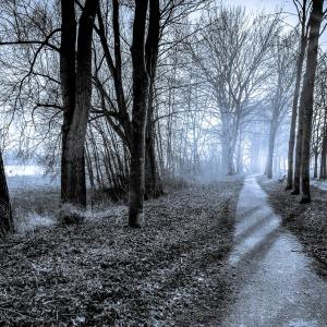 trees-643302_1280