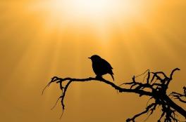 bird-313614_1280