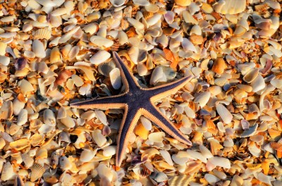 starfish-and-shells