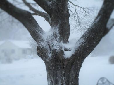 winters-grasp