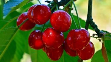 cherries-3459915_1920 (3)