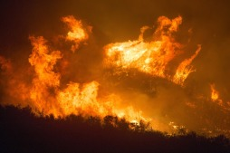 forest-fire-3905864_1920
