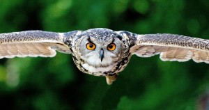 owl-2106651_1920 (1)