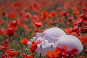 poppies and mask