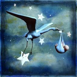stork-4454455_1920 (1)