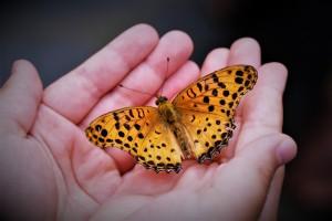 butterfly-4396444_1920 (1)