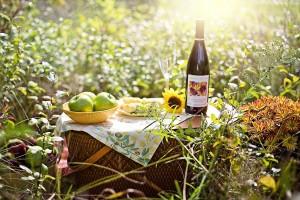 picnic-3661796_1920 (1)
